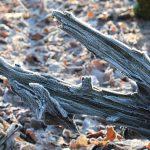 Altes Holz mit Frost © Lars Baus 2016
