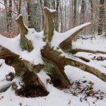 Baumwurzel im Schneekleid © Lars Baus 2017