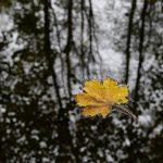 Blatt im Fluss © Lars Baus 2014