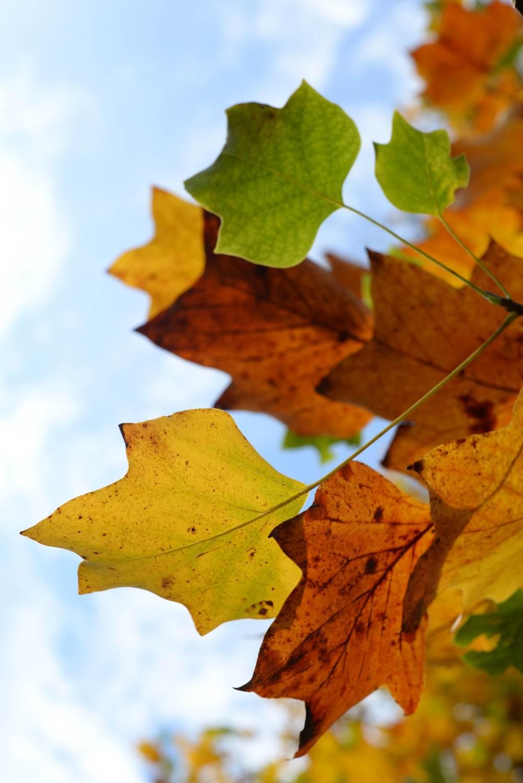 Bonbon-Herbst © Lars Baus 2014