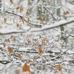 Buchenäste mit Schnee © Lars Baus 2013