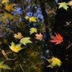 Bunte Herbstblätter im Teich © Lars Baus 2015