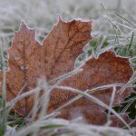 Dezembermorgen © Lars Baus 2014