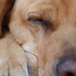 Dog Siesta © Lars Baus 2015