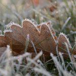 Eichenblatt mit Bodenfrost © Lars Baus 2016