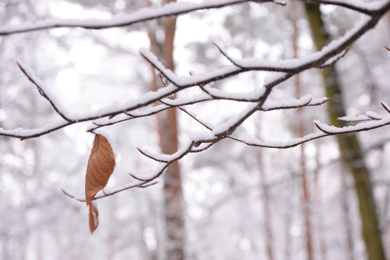 Eins im Winter © Lars Baus 2014