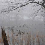 Entenversammlung im Nebel © Lars Baus 2016