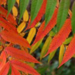 Farbige Blätter © Lars Baus 2019