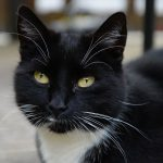 Fast schwarze Katze © Lars Baus 2015