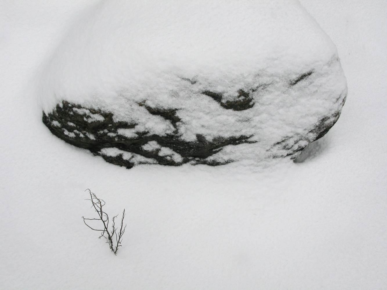 Fels und Zweig im Schnee © Lars Baus 2014