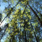 Frühling im Wald © Lars Baus 2016