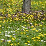 Frühlingswiese © Lars Baus 2016
