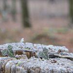 Frost © Lars Baus 2014
