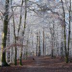 Frost im Grunewald © Lars Baus 2016