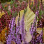 Heide und Herbstlaub © Lars Baus 2015