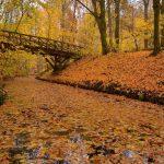 Herbst am Fenn © Lars Baus 2018