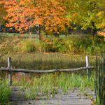 Herbst am Teich © Lars Baus 2015
