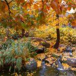 Herbst ohne Tiger © Lars Baus 2016
