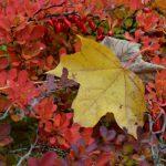 Herbstblätter und Dornen © Lars Baus 2015