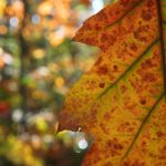 Herbstfarben © Lars Baus 2018