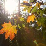 Herbstlaub Lens Flare © Lars Baus 2019
