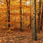 Herbstlicher Wald © Lars Baus 2018