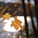 Herbstliches Lichtspiel © Lars Baus 2018