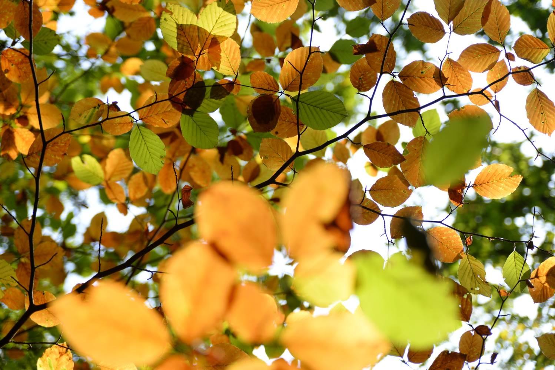Herbstpalette © Lars Baus 2014