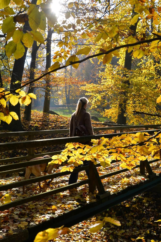 Herbstpassage © Lars Baus 2015