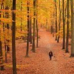 Herbstspaziergang © Lars Baus 2018