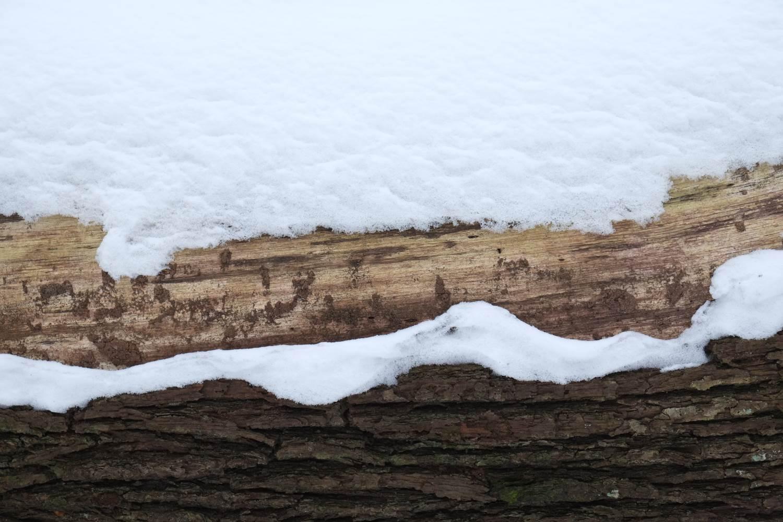 Holz und Schnee © Lars Baus 2014