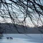 Hunde auf dem Eis © Lars Baus 2019