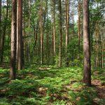 Junge Farne im Wald © Lars Baus 2017