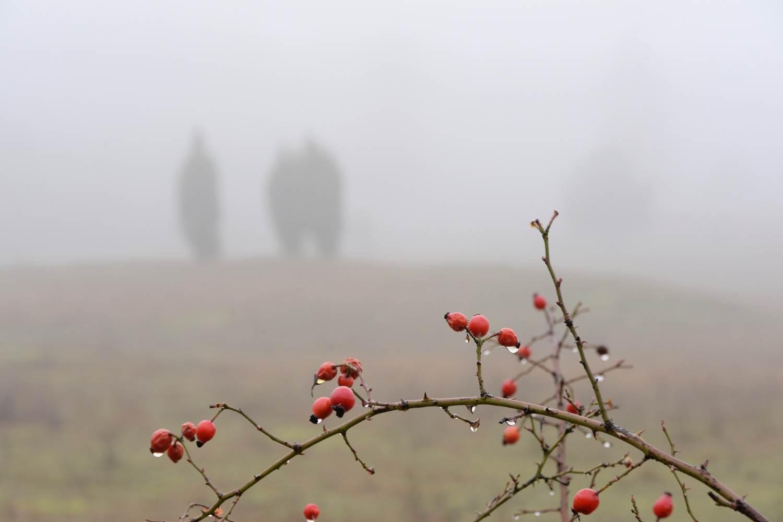 Landschaft im Nebel © Lars Baus 2016