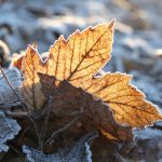 Laub am Wintermorgen © Lars Baus 2016