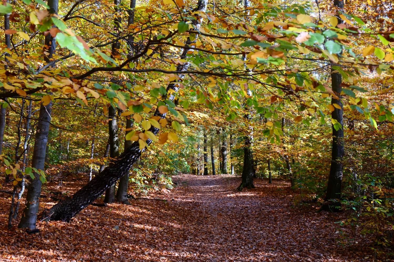 Laubwald im Herbst © Lars Baus 2013