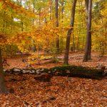 Laubwald im Herbstkleid © Lars Baus 2018