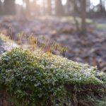 Mooshalme im Bodenfrost © Lars Baus 2018