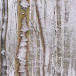 Neuschnee im Buchenwald © Lars Baus 2018