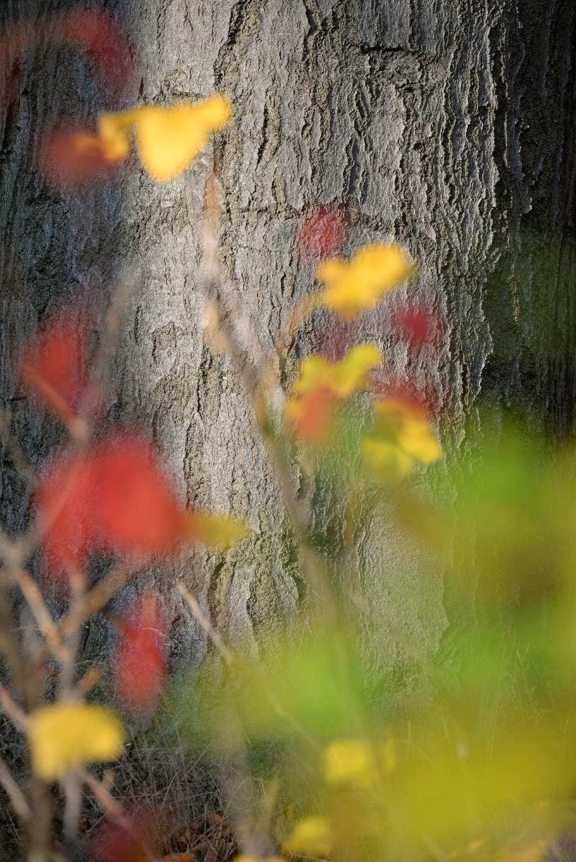 Novemberfarben © Lars Baus 2014