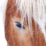 Pferdeblick © Lars Baus 2013