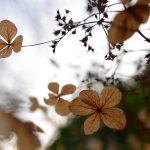 Schmetterlingsblätter © Lars Baus 2013