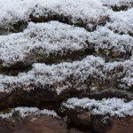 Schnee auf Kiefernrinde © Lars Baus 2019