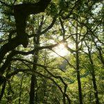 Shinrin Yoku - Waldbaden © Lars Baus 2018