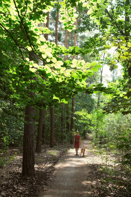 Sommer im Wald © Lars Baus 2018