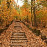 Treppe zum Herbst © Lars Baus 2018