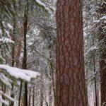 Wald im Schneekleid © Lars Baus 2014