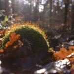Waldboden im Spätherbst © Lars Baus 2017