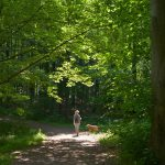 Waldspaziergang © Lars Baus 2018