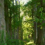 Weg zwischen alten Bäumen © Lars Baus 2018